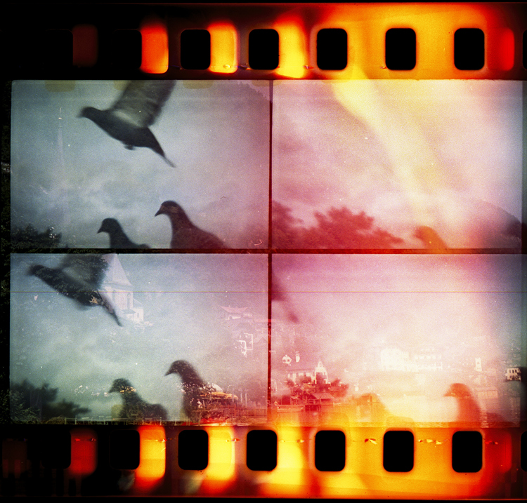 Four film photographs of a pigeon flying.